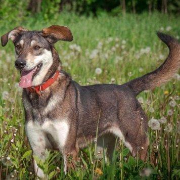 Муза - Собаки в добрые руки