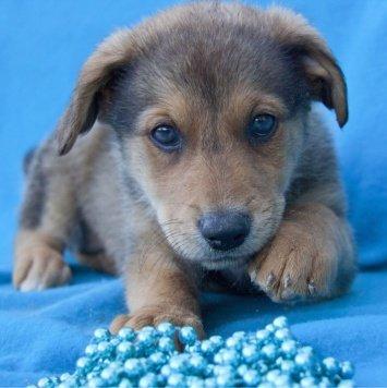 Чудесные малыши - Собаки в добрые руки