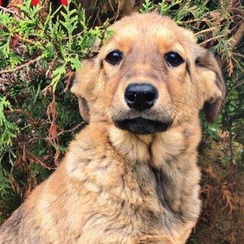 щенулька Айра - Собаки в добрые руки