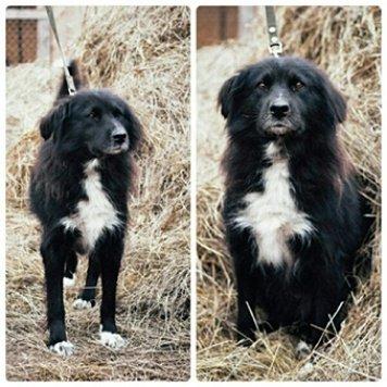 Липа - Собаки в добрые руки