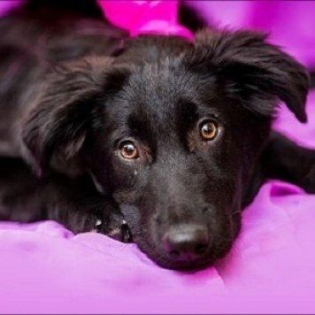 Фенечка (Офелия) - Собаки в добрые руки