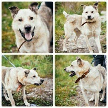 Аполлон - Собаки в добрые руки