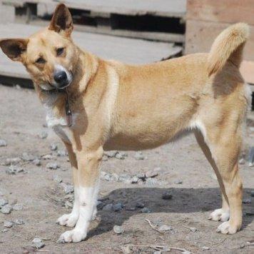 Сирена - Собаки в добрые руки