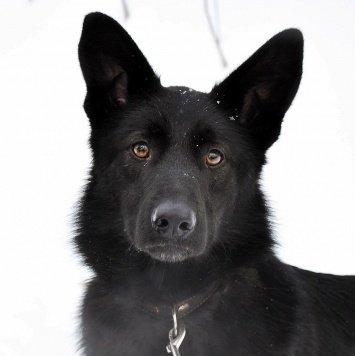 Зола - Собаки в добрые руки