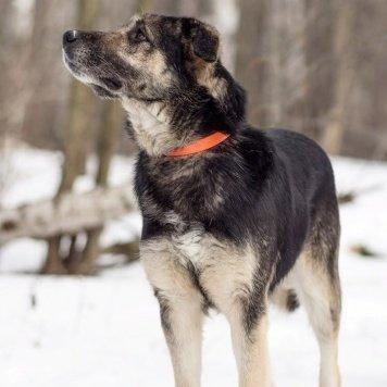 Тарас - Собаки в добрые руки