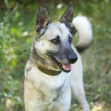 Грейд - Собаки в добрые руки