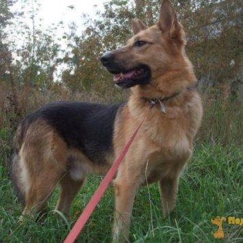Гордей - Собаки в добрые руки