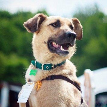 Эмиль - Собаки в добрые руки