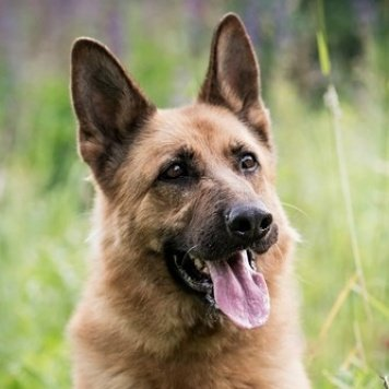 Сиара - Собаки в добрые руки