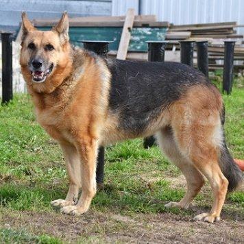 Камилла - Собаки в добрые руки