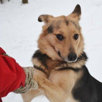 Эйли - Собаки в добрые руки