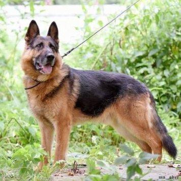 Феникс - Собаки в добрые руки