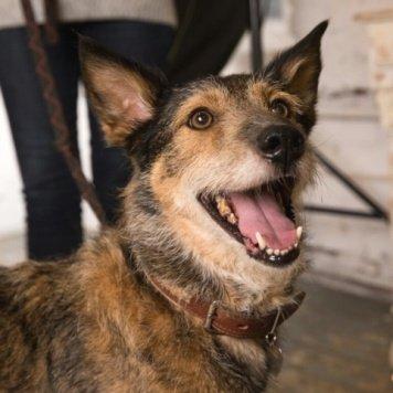 Рыжиков - Собаки в добрые руки