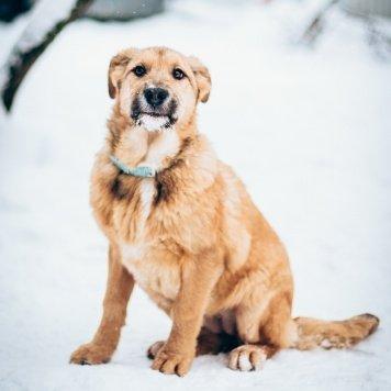 Руфина - Собаки в добрые руки