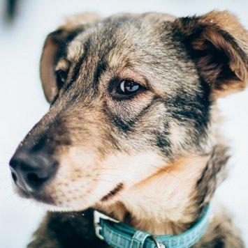 Пандора - Собаки в добрые руки