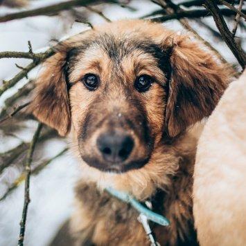Матти - Собаки в добрые руки