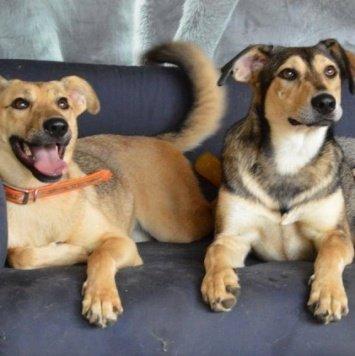 Соли и Мими - Собаки в добрые руки