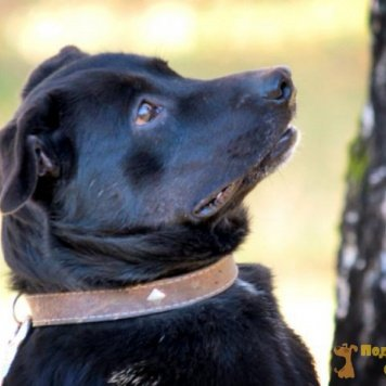 Черныш (Чернышевский) - Собаки в добрые руки