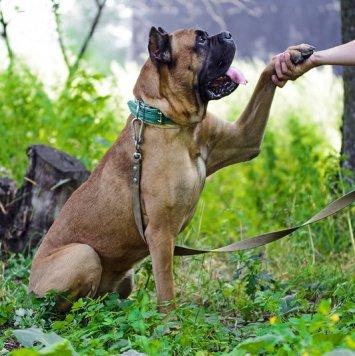 Корней - Собаки в добрые руки