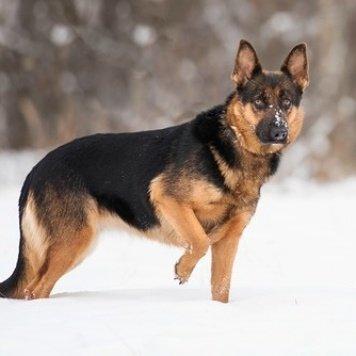 Изюминка - Собаки в добрые руки