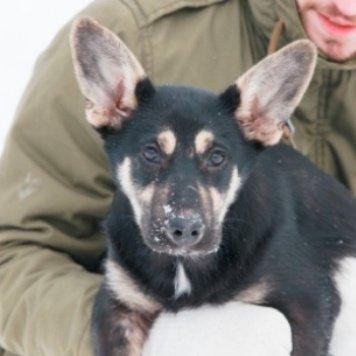 Бубука - Собаки в добрые руки