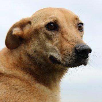 Тоби - Собаки в добрые руки