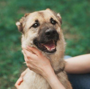 Казбек - Собаки в добрые руки