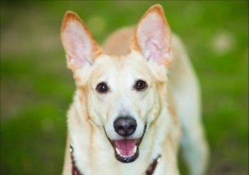 Бим Брумель - Собаки в добрые руки