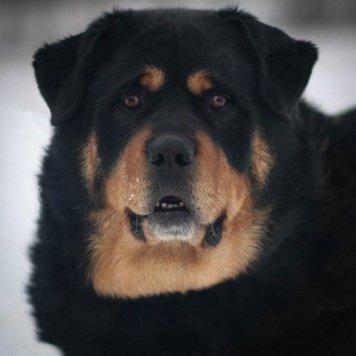 Джон - Собаки в добрые руки