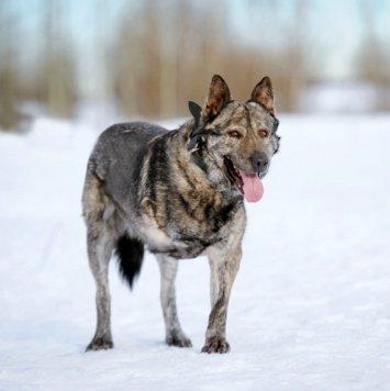 Осло - Собаки в добрые руки