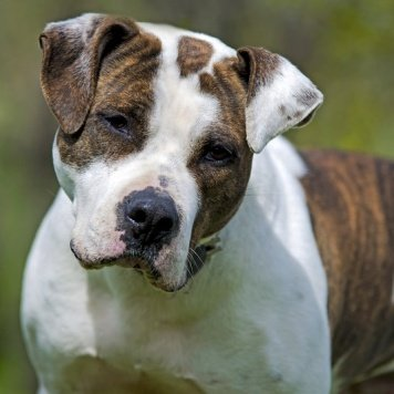 Яшма - Собаки в добрые руки
