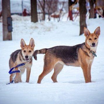 Кесси и Джесси - Собаки в добрые руки