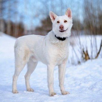 Акела - Собаки в добрые руки