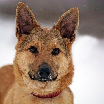 Мегрэ - Собаки в добрые руки