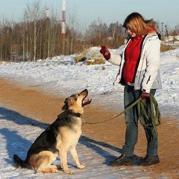 Кекс - Собаки в добрые руки