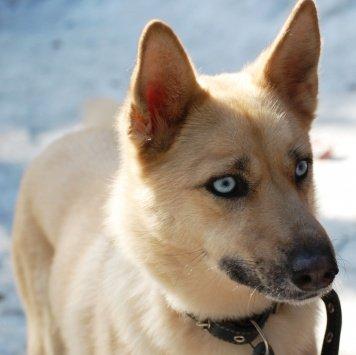 Исла - Собаки в добрые руки