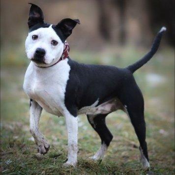 Липси - Собаки в добрые руки