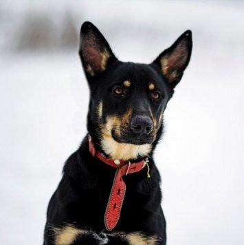 Парк - Собаки в добрые руки