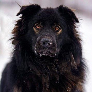 Риддик - Собаки в добрые руки