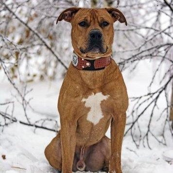 Ровен - Собаки в добрые руки