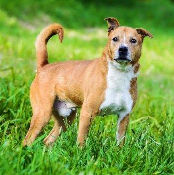 Бархат - Собаки в добрые руки
