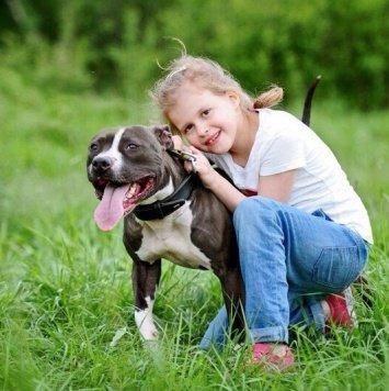 Барс - Собаки в добрые руки