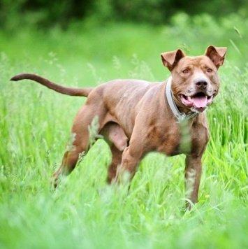 Ивар - Собаки в добрые руки