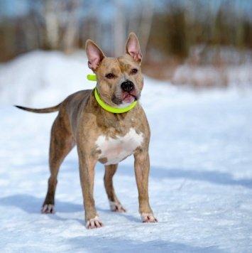 Рурк - Собаки в добрые руки
