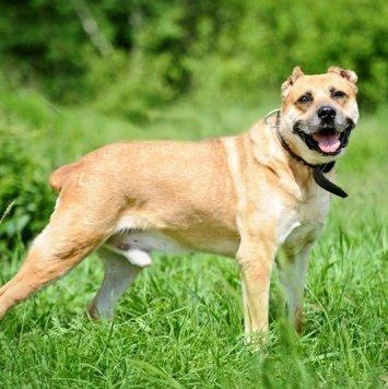 Магеллан - Собаки в добрые руки