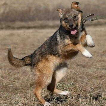 Хит - Собаки в добрые руки