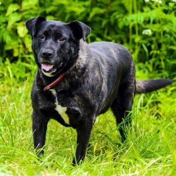 Одесса - Собаки в добрые руки