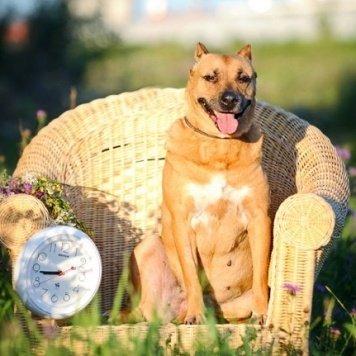 Калинка - Собаки в добрые руки
