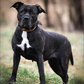Рябинка - Собаки в добрые руки