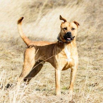 Кармель - Собаки в добрые руки
